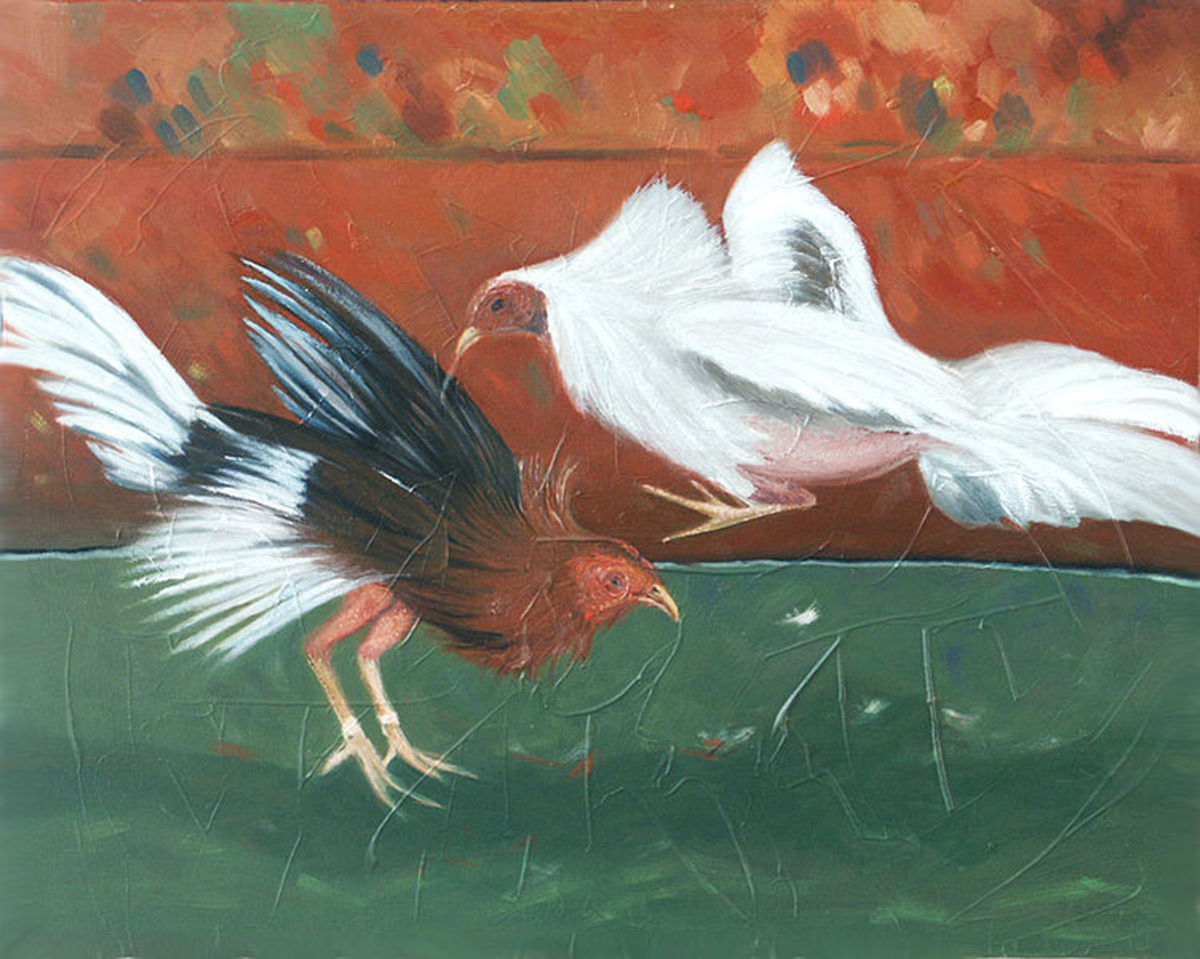 Roosters' fight