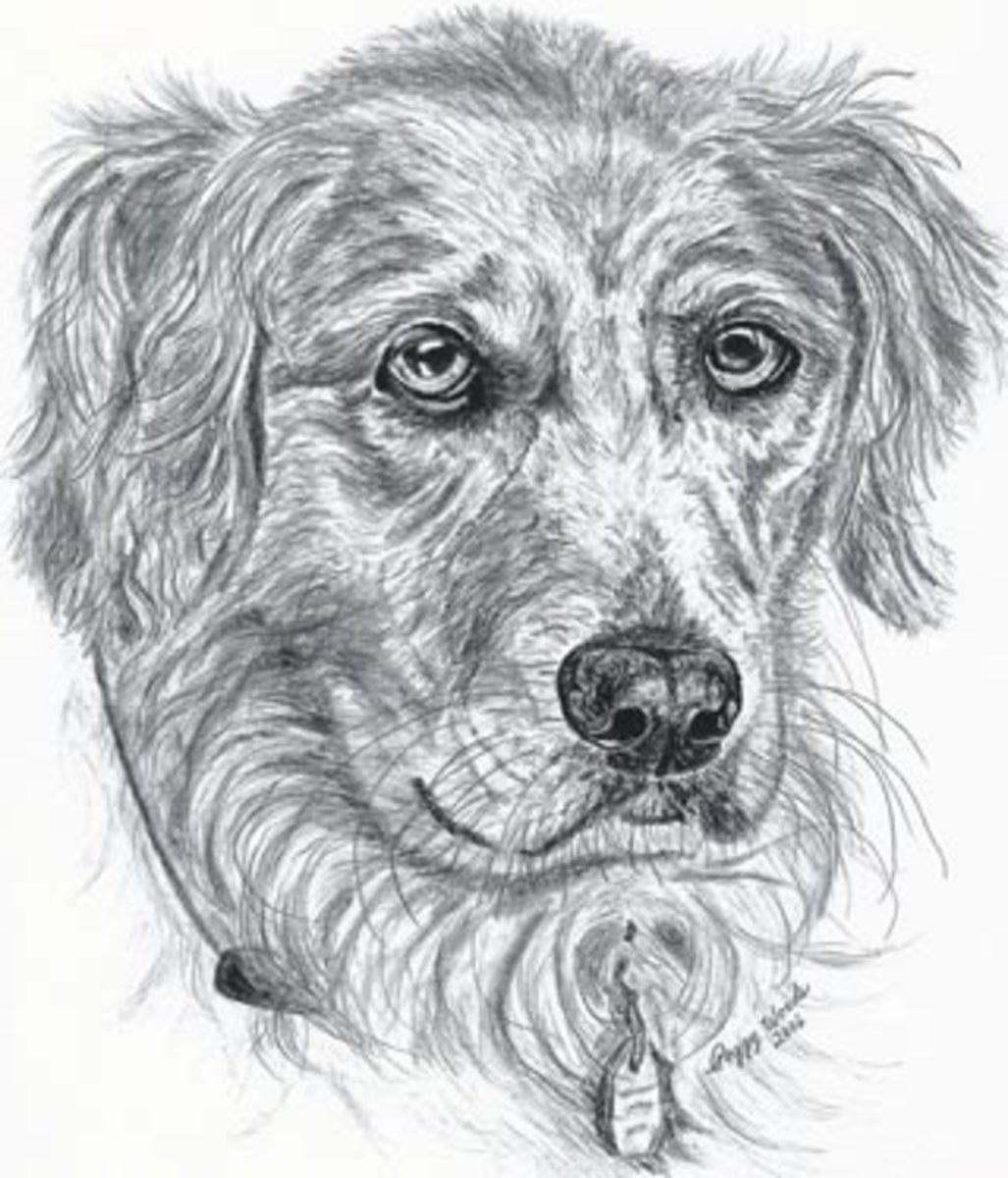 My original pencil drawing of a Golden Retriever.  Who wouldn't love that face?