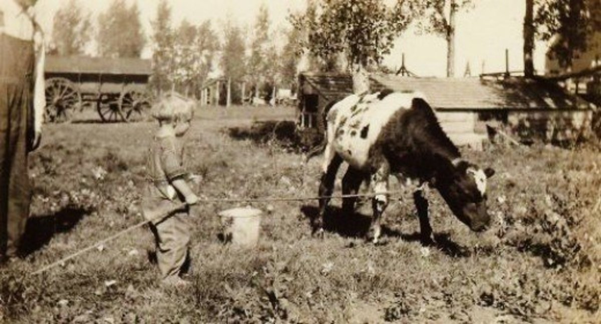 Old Pictures Of Farming In North Dakota In The Early 1900s