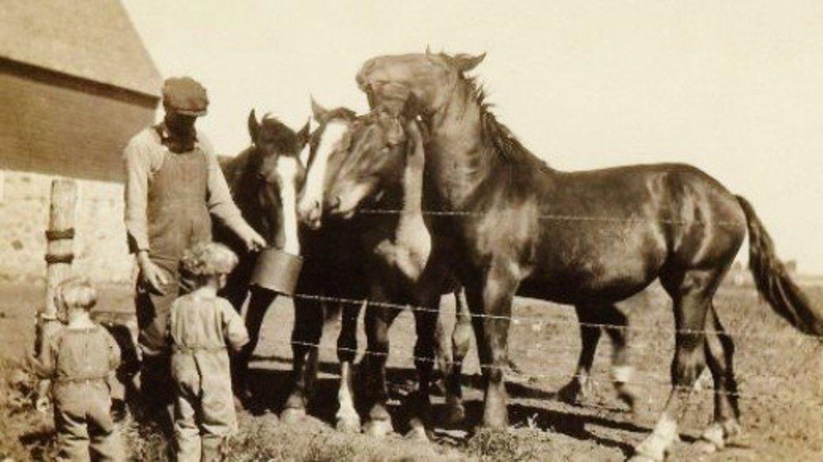 Feeding the plough horses