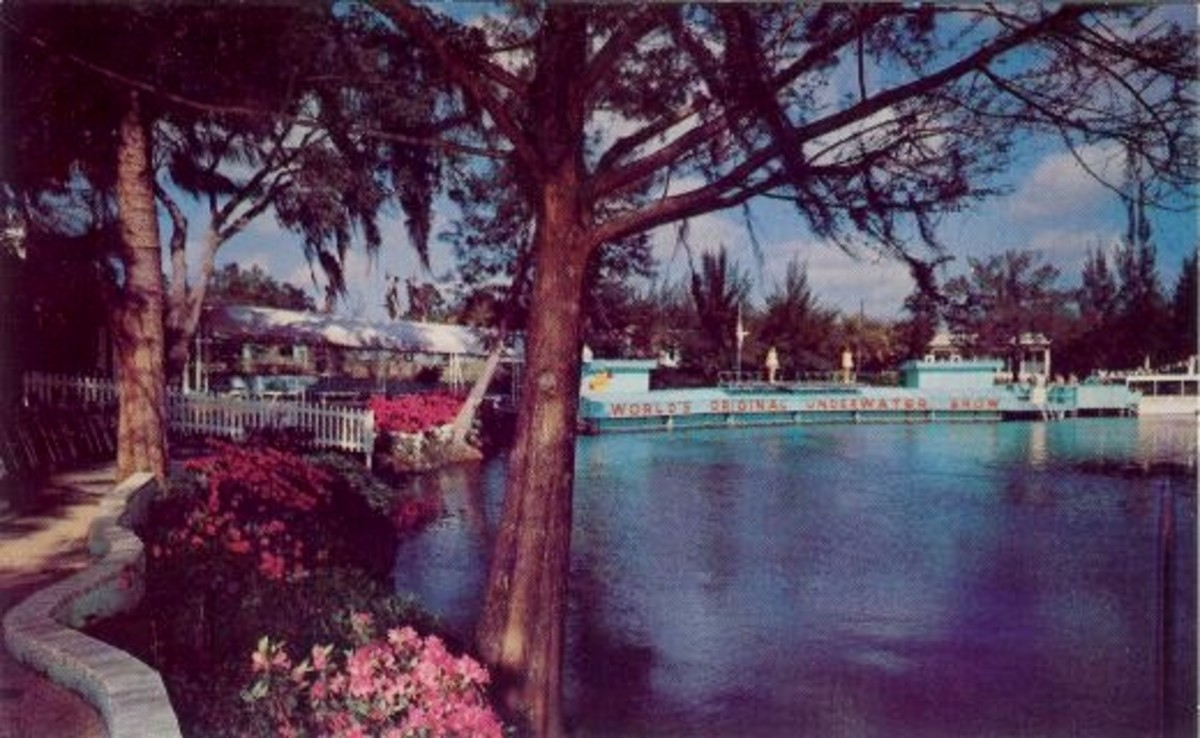 Vintage Postcard of Beautiful Weeki Wachee Springs, Florida