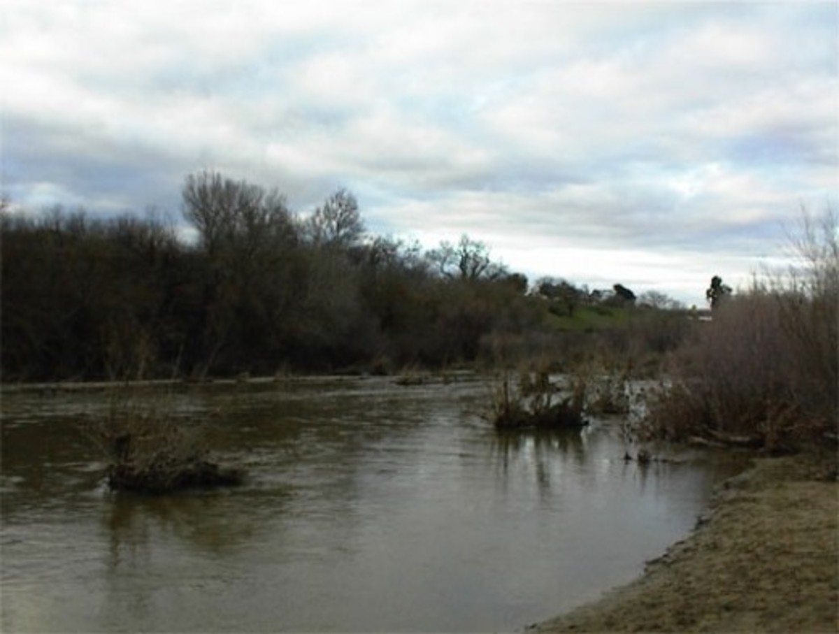 Salinas River Flowing through Paso Robles, CA in February, 2010