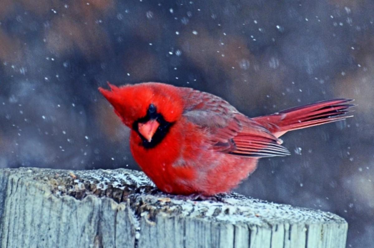 Hang a Bird Feeder to Hear Their Song: Giving has a magical way of giving back.