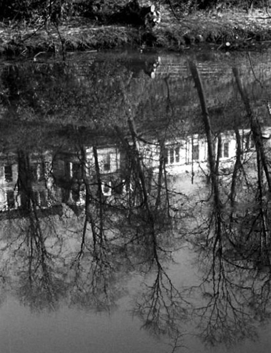 kelvin drive, reflected in kelvin