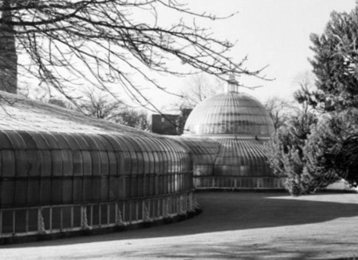 kibble palace, botanic gardens
