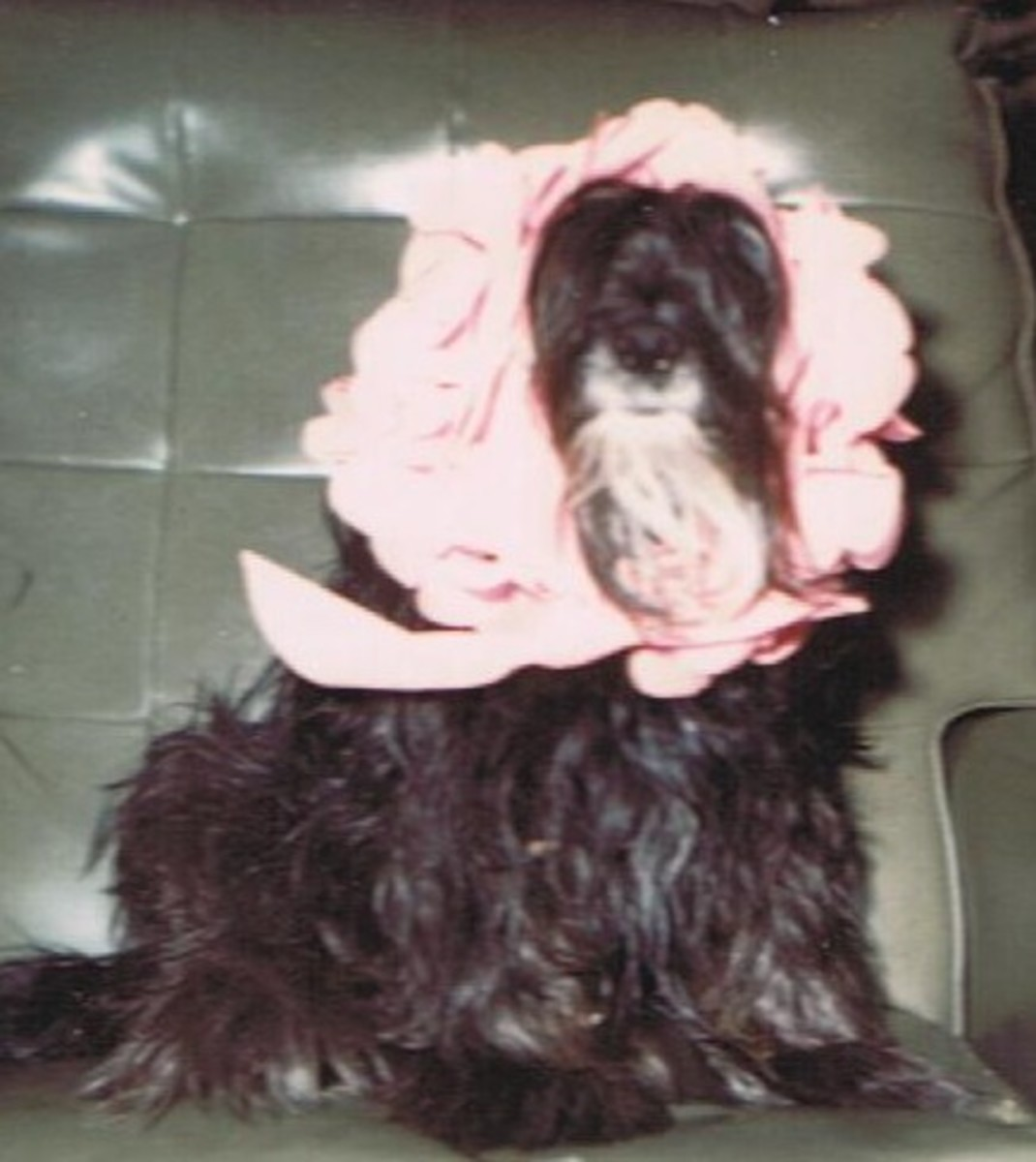 Lindy Our First Dog