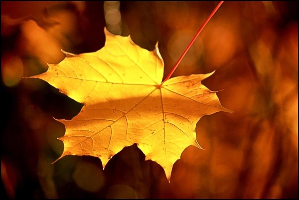 A beautiful leaf in fall lighting