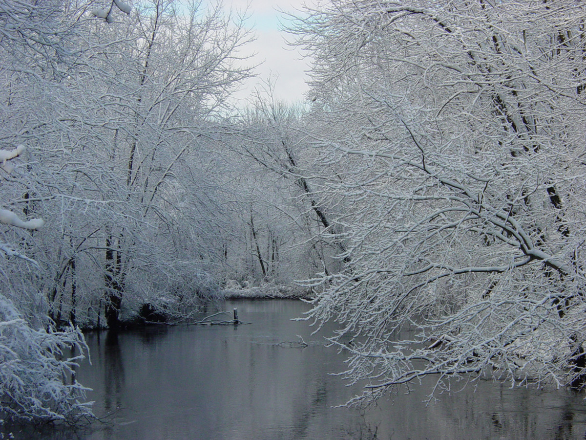 Michigan's beautiful fall foliage! (just kidding) Winter on the Paw Paw River