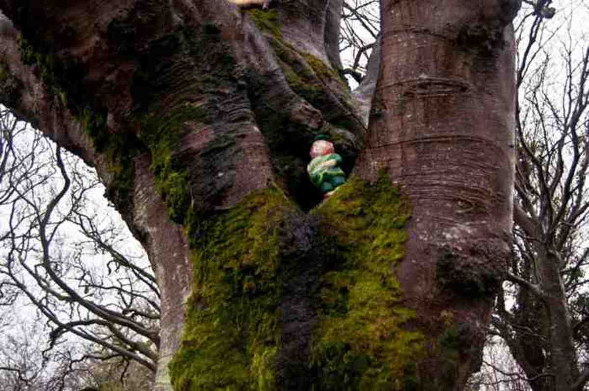 leprechaun at  ballyalban fairy fort  county clare Ireland Waiting for the Fairy Folk!