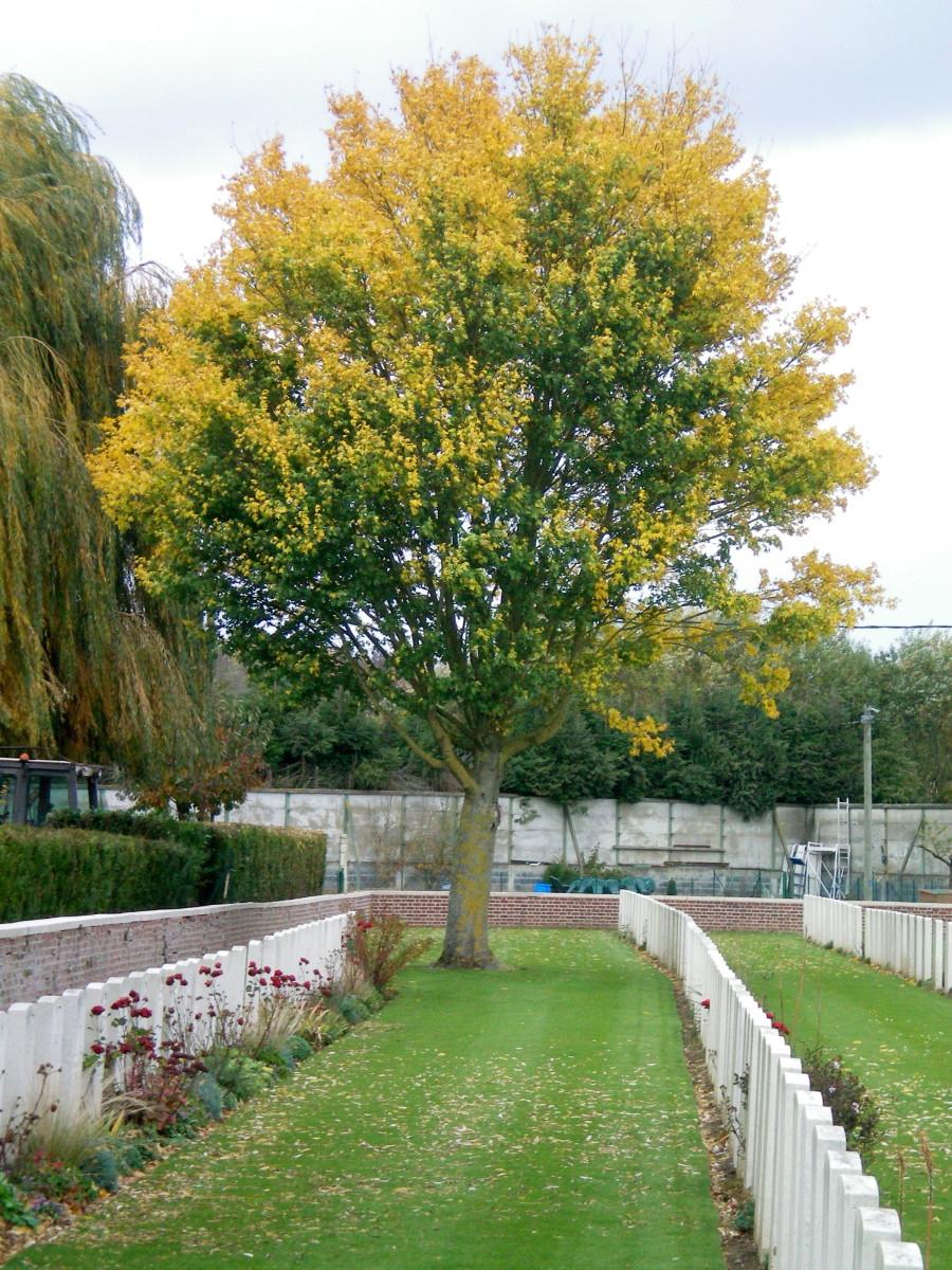 Dartmoor Cemetery, France (c) A. Harrison