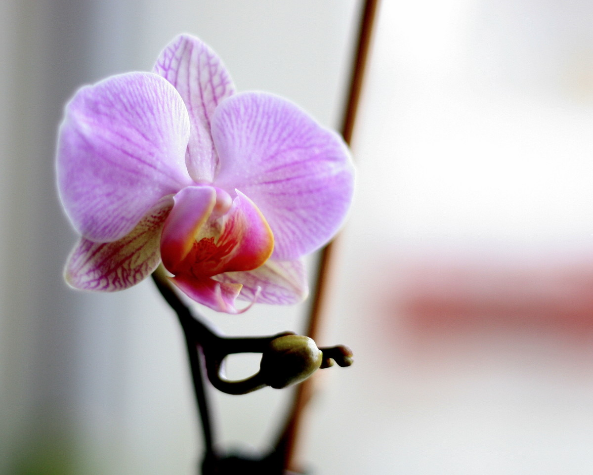Forget Self-Esteem:  The Self-Pollinating Chinese Orchid - Improving your Self Compassion