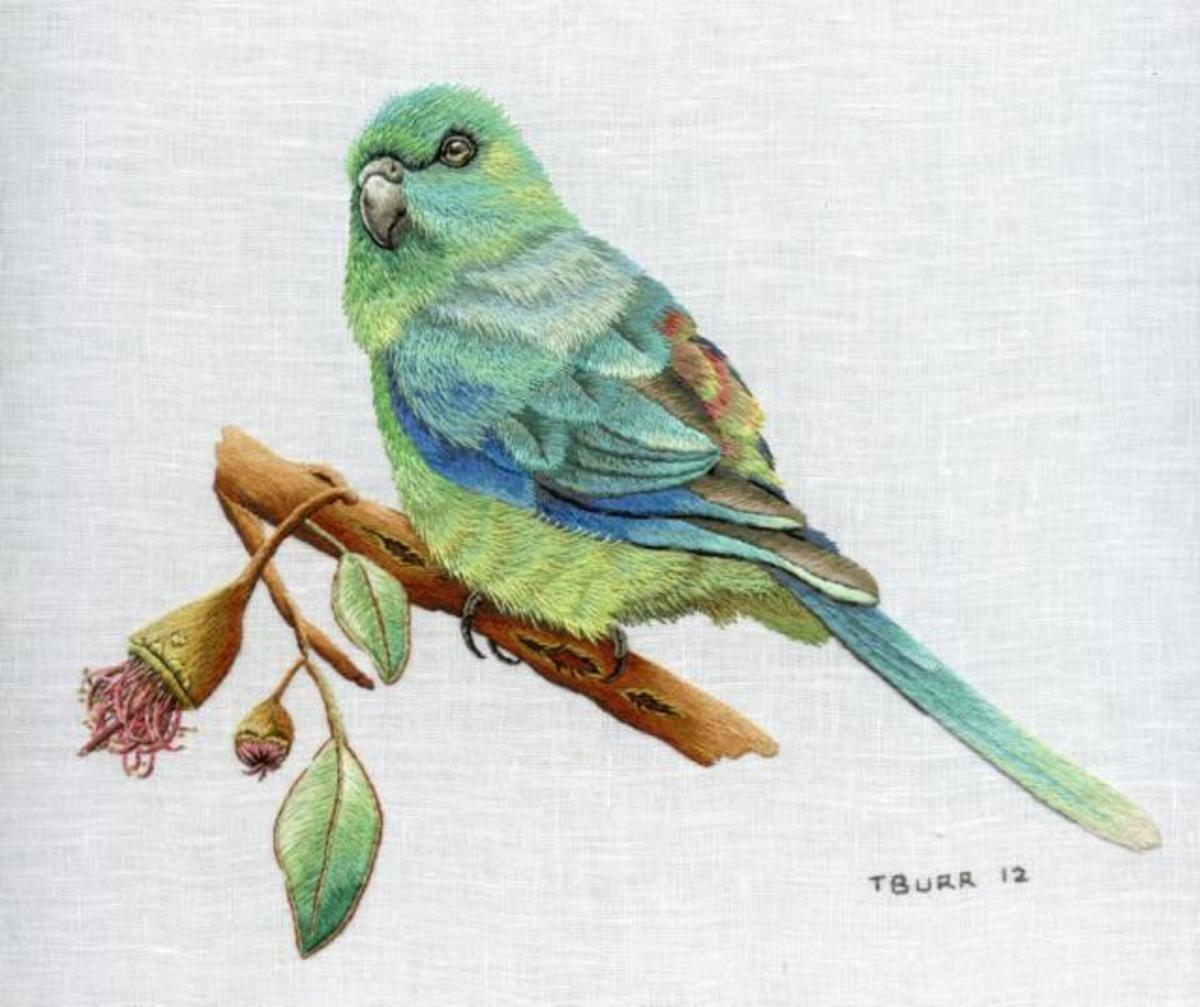 Red-rumped parrot by Trish Burr.  Used with permission.
