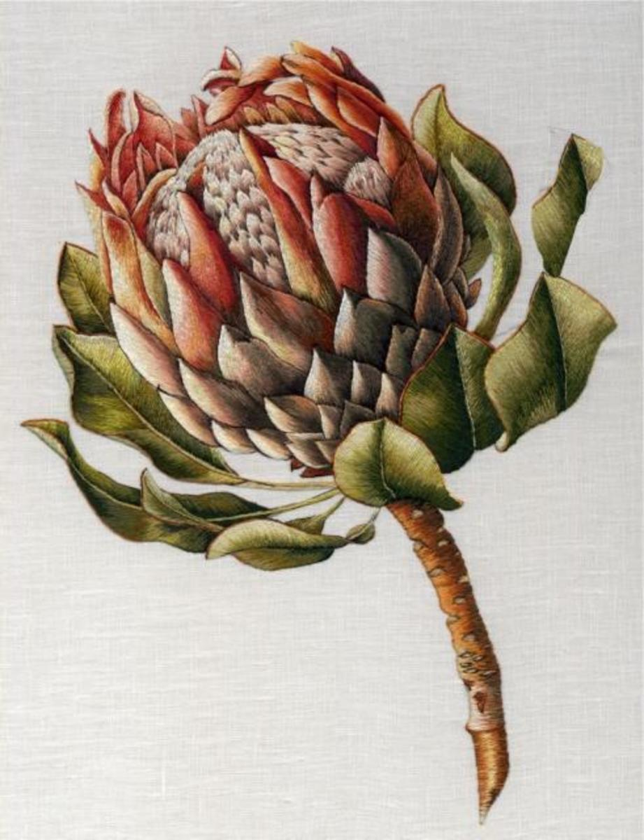 The Protea of Hawaii and other tropical places.   By Trish Burr.  Used with permission.