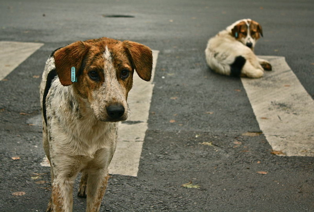 With the owners now gone, dogs must face up to a life on the streets.