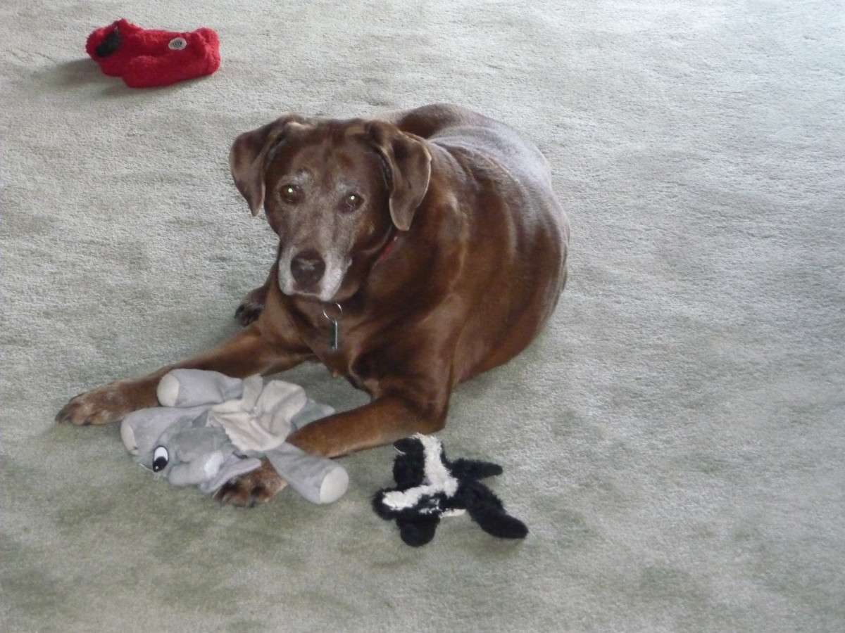 Ginger and a few of her toys