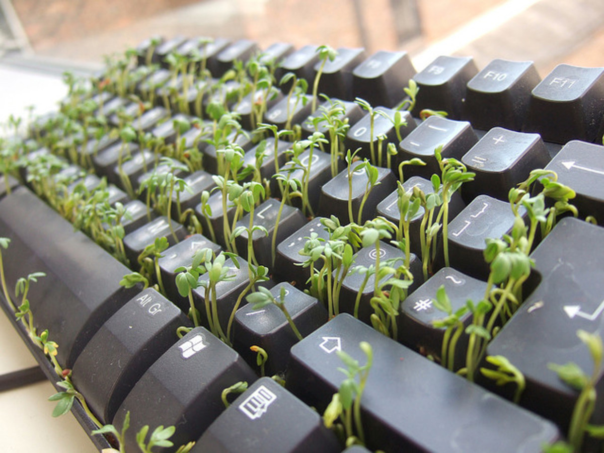 A poet's words grow out of the keyboard from seeds of creativity.