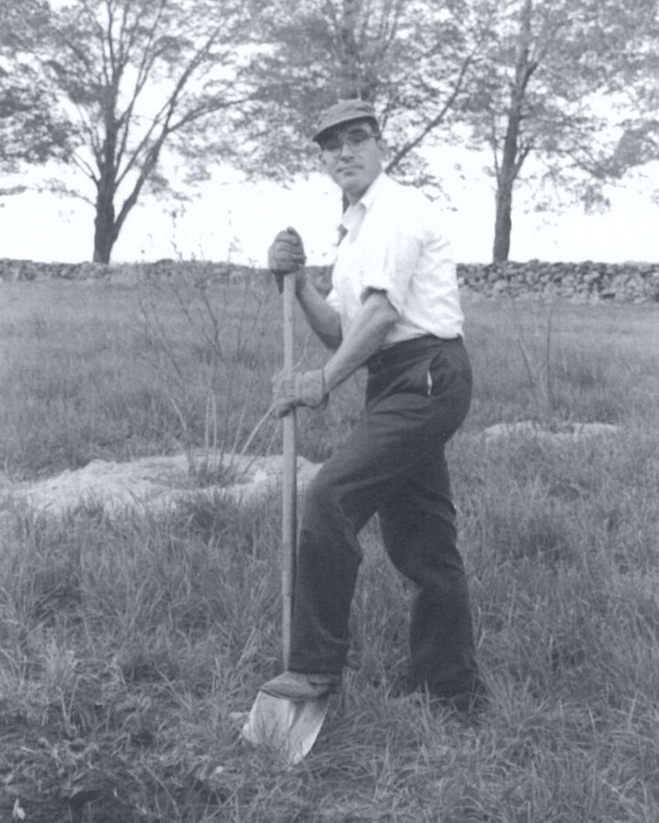 Bill Bramlage Digging Planting Holes for Blueberries, Leverett, MA. May 1971.