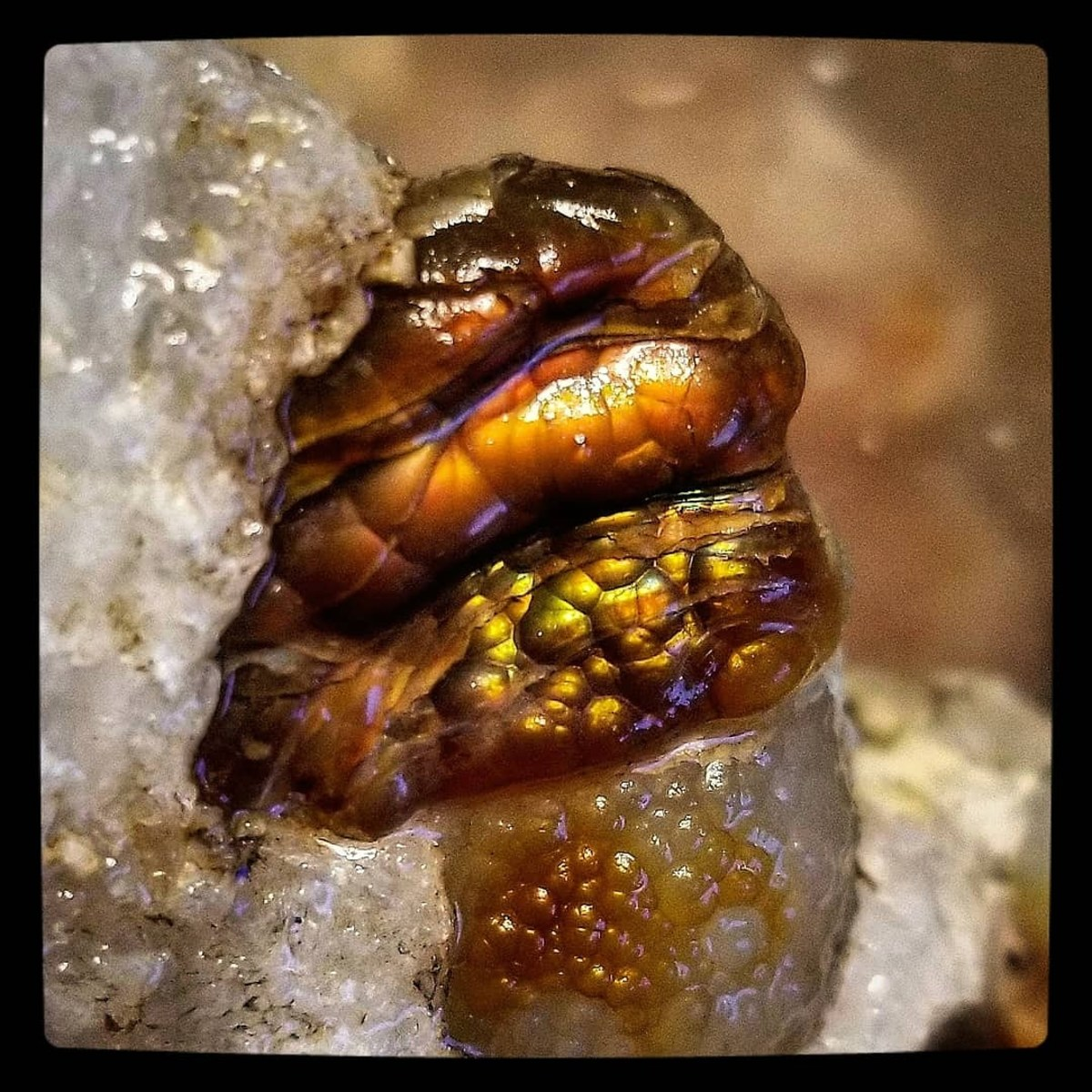 """I have here seen the power and glory of the Supreme Being. The majesty of His handiwork is in that testimony of the rocks"" ~ Lafayette H. Bunnell  ~ American physician, author, and explorer - Arizona fire agate"