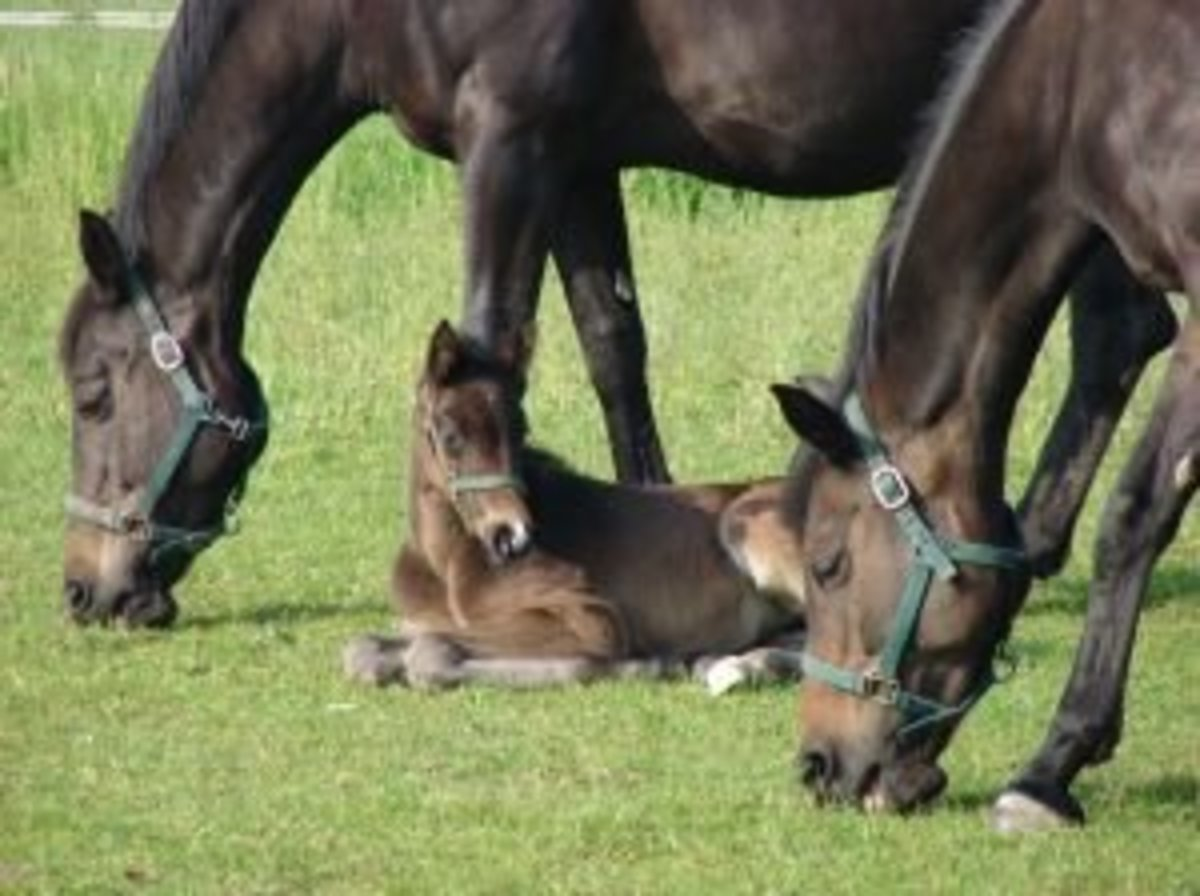 Two mares and a foal