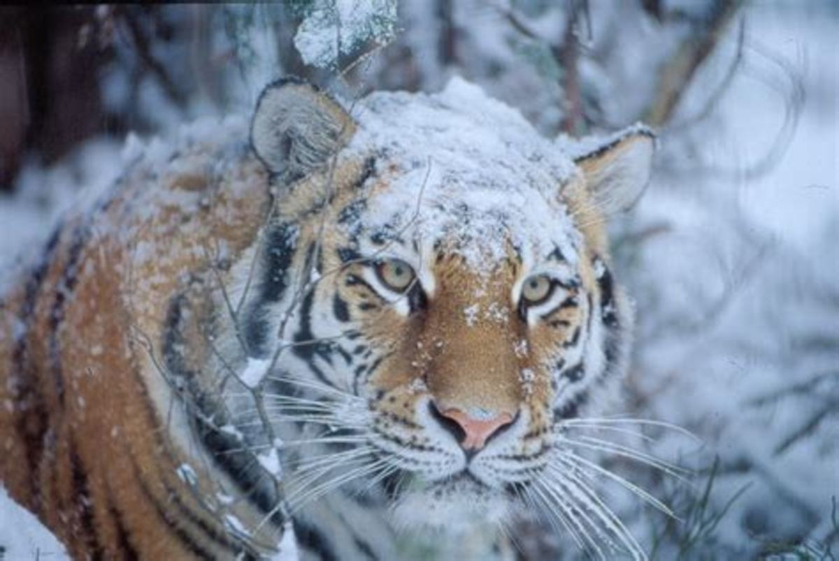 Silent in the snow...