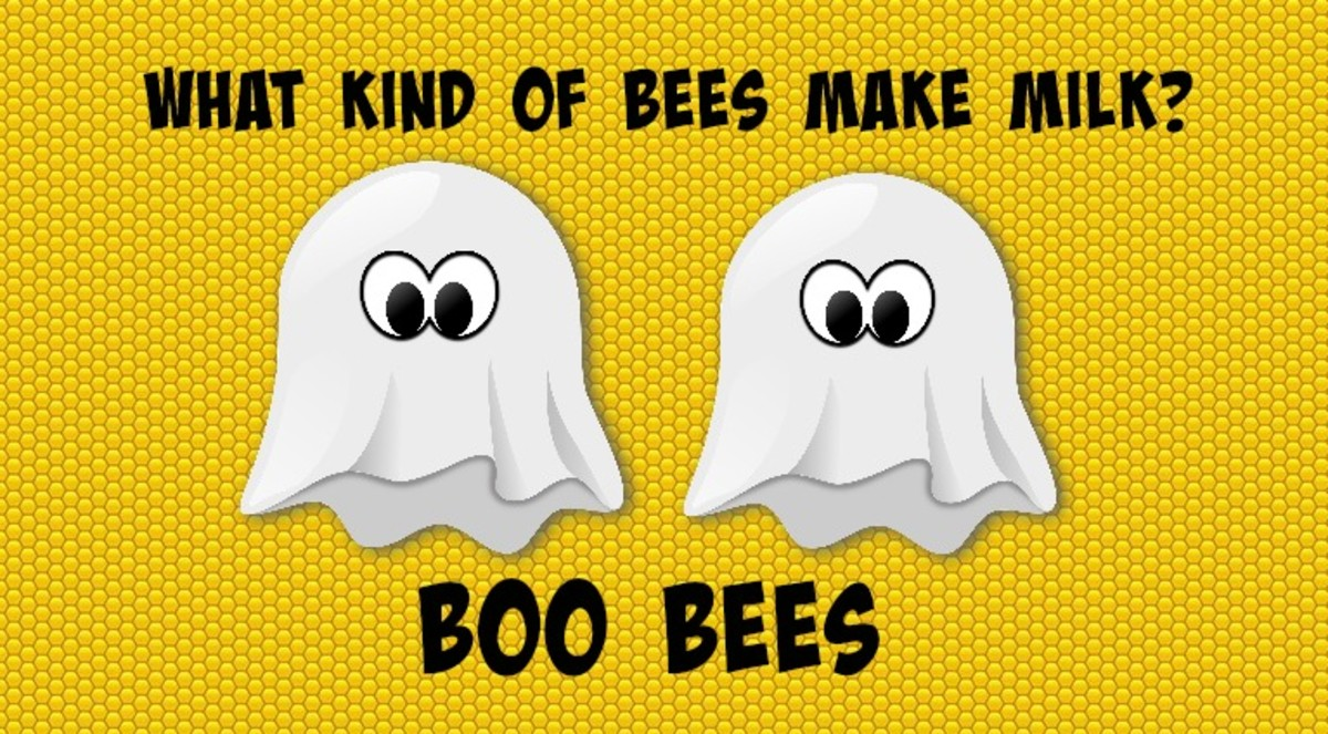 What kind of bees make milk? Boo bees.