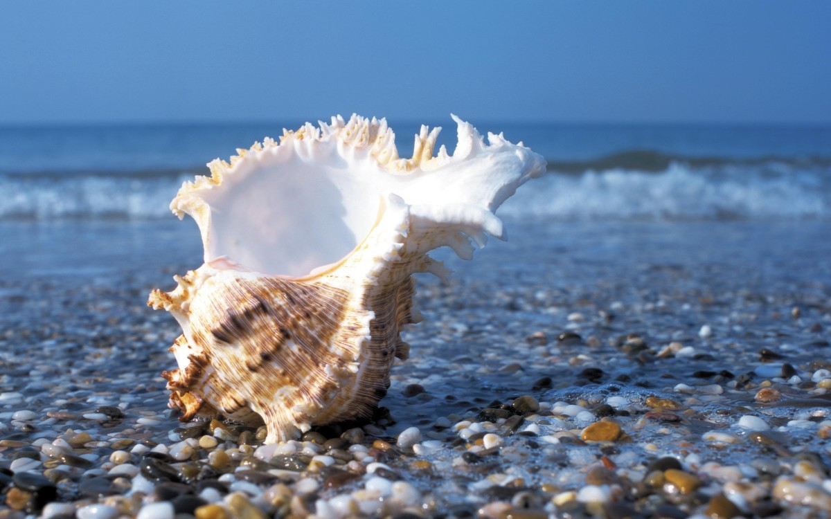 blowing conches