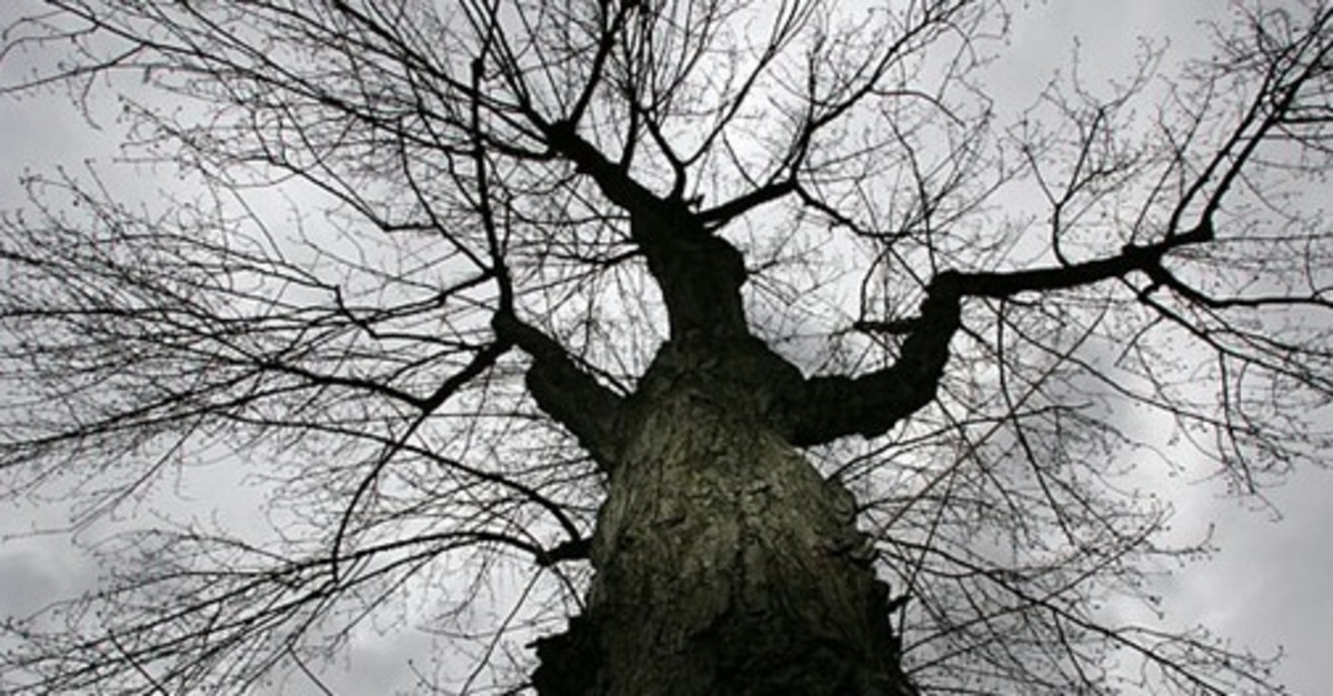 lessons-from-a-tree
