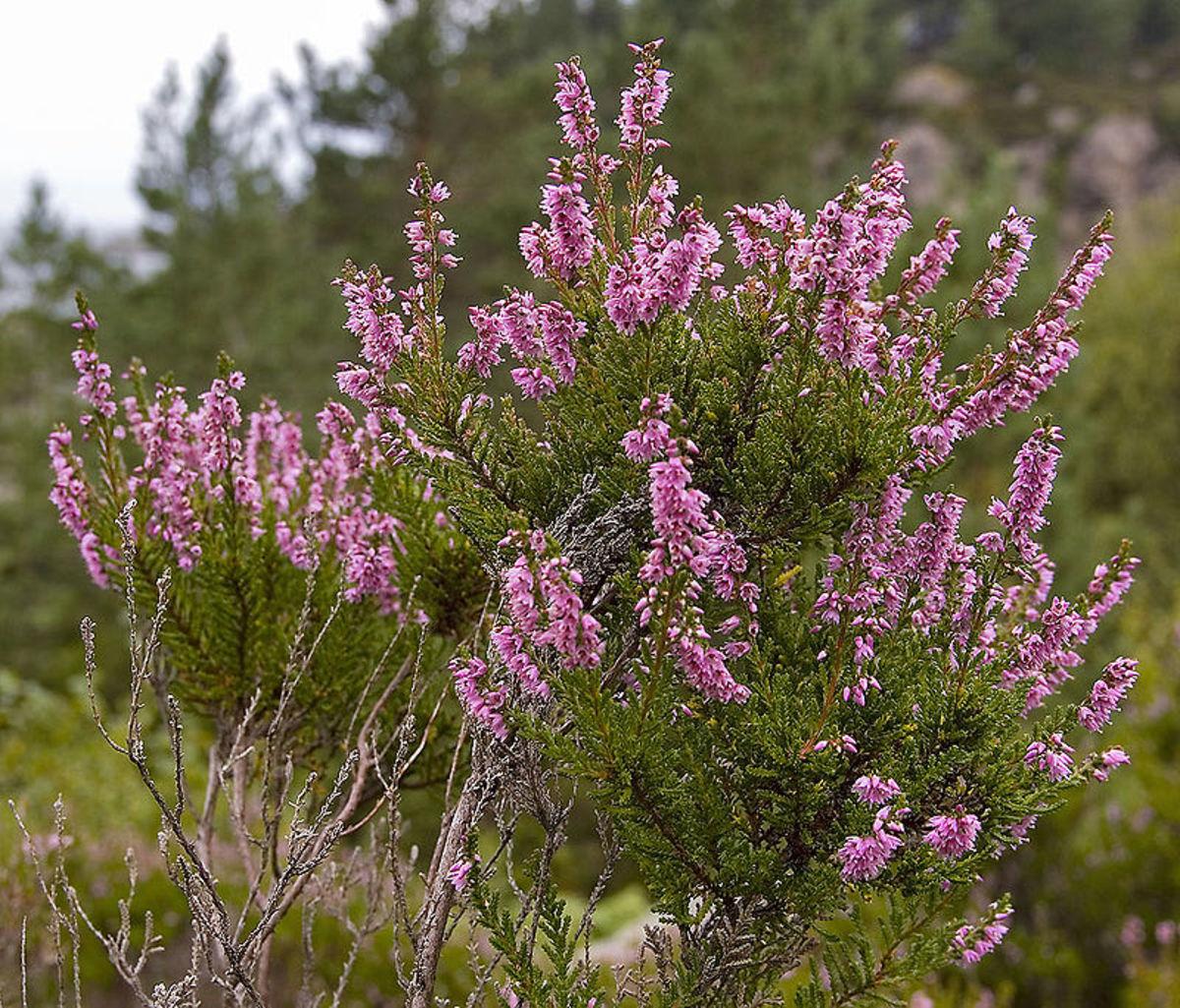 The flowering prairie