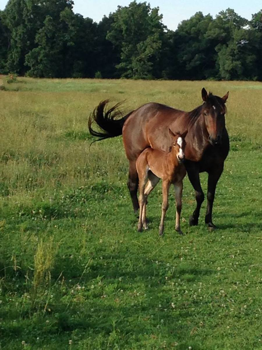 A mare and foal on the farm