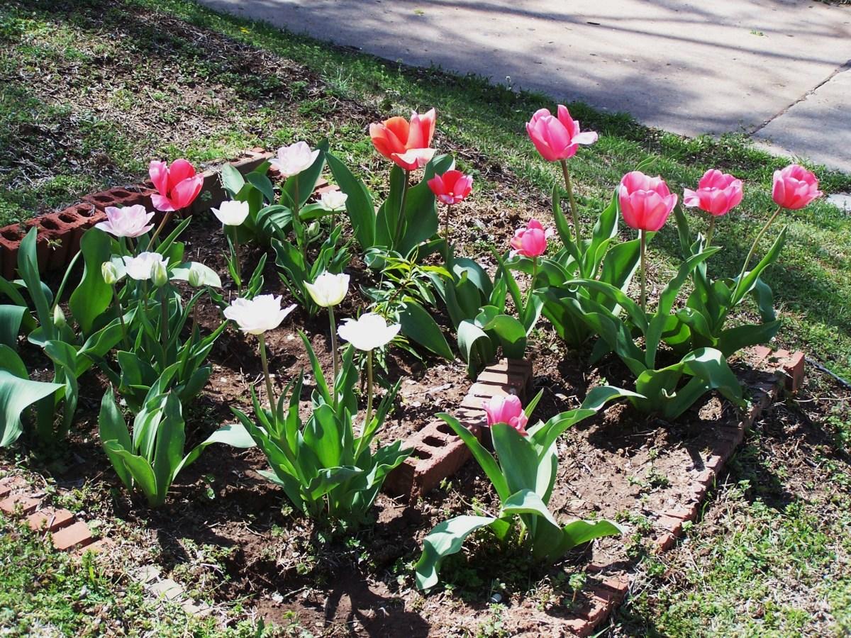 Flowering buds abound...