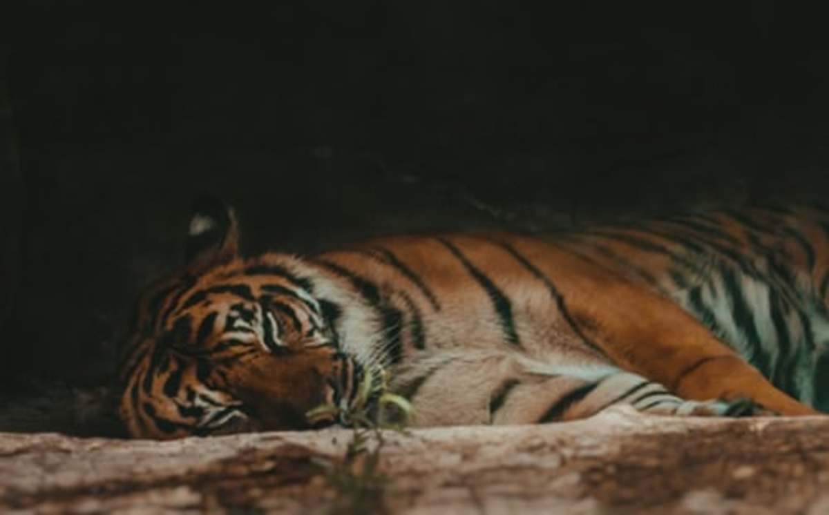 the_tiger_and_his_land