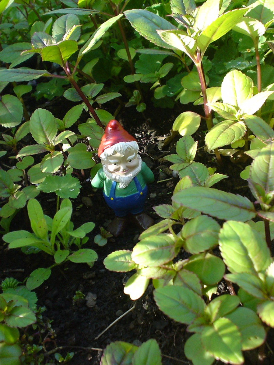 gnomes-game-flash-fiction