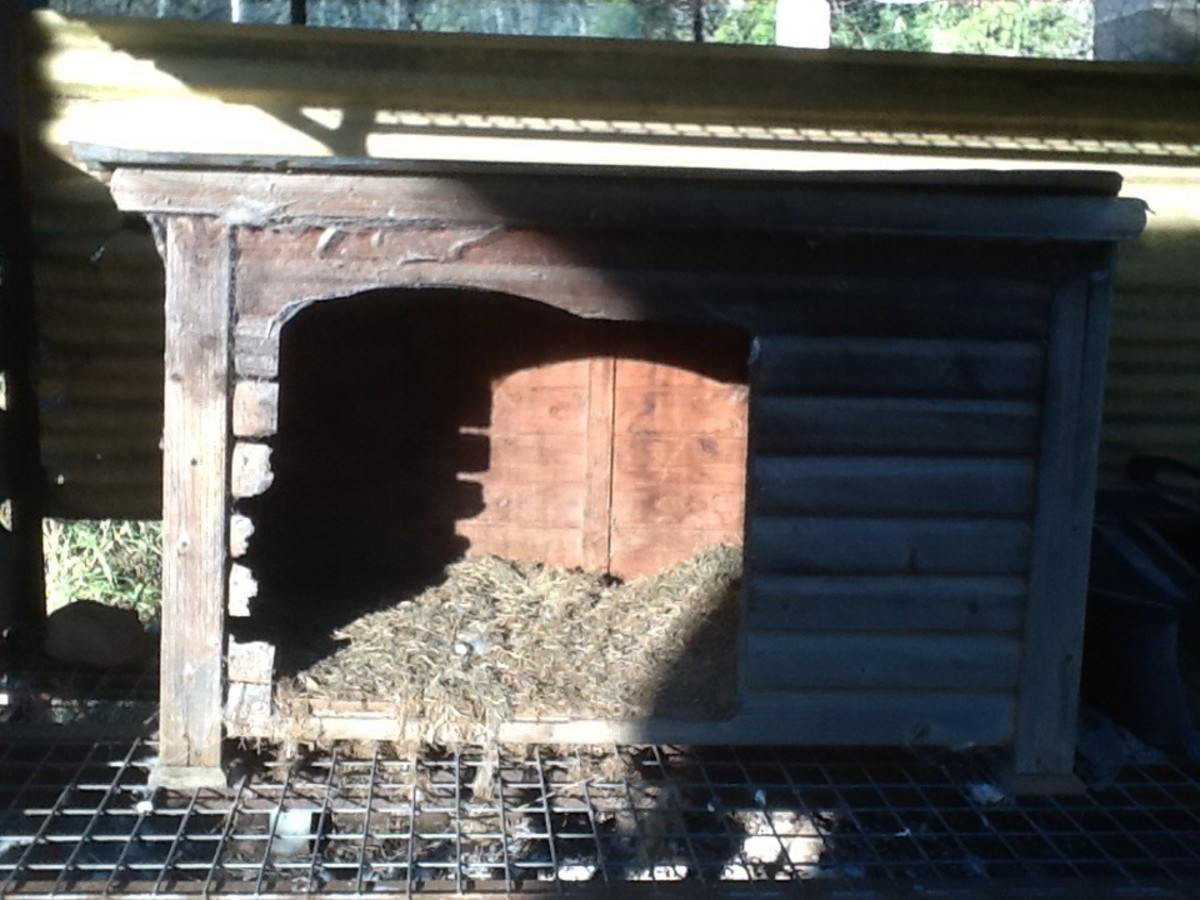 One of the nesting boxes