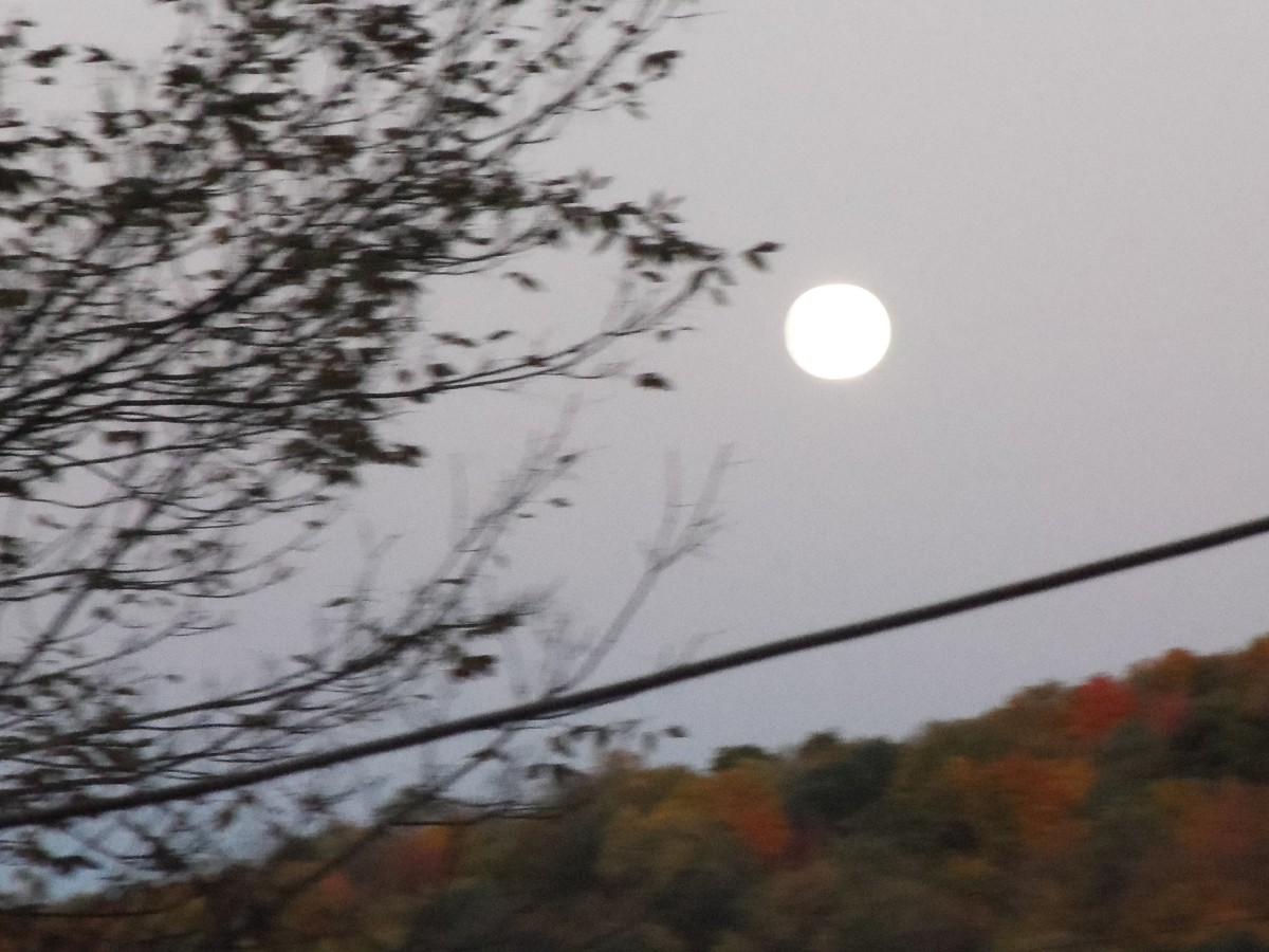 A moon light night not long ago give an extra lust to objects below. Light enough to film autumn leaves at midnight.