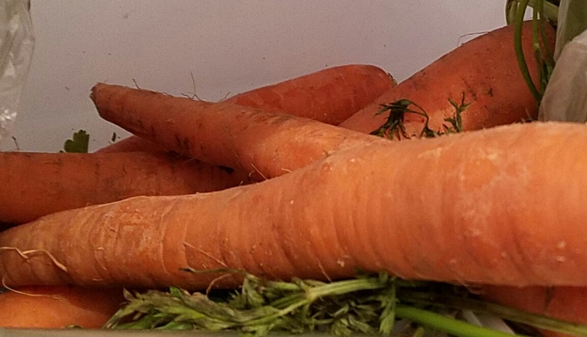 Carrots are yummy and sweet, and contain lots of nutrients for hamster like me.