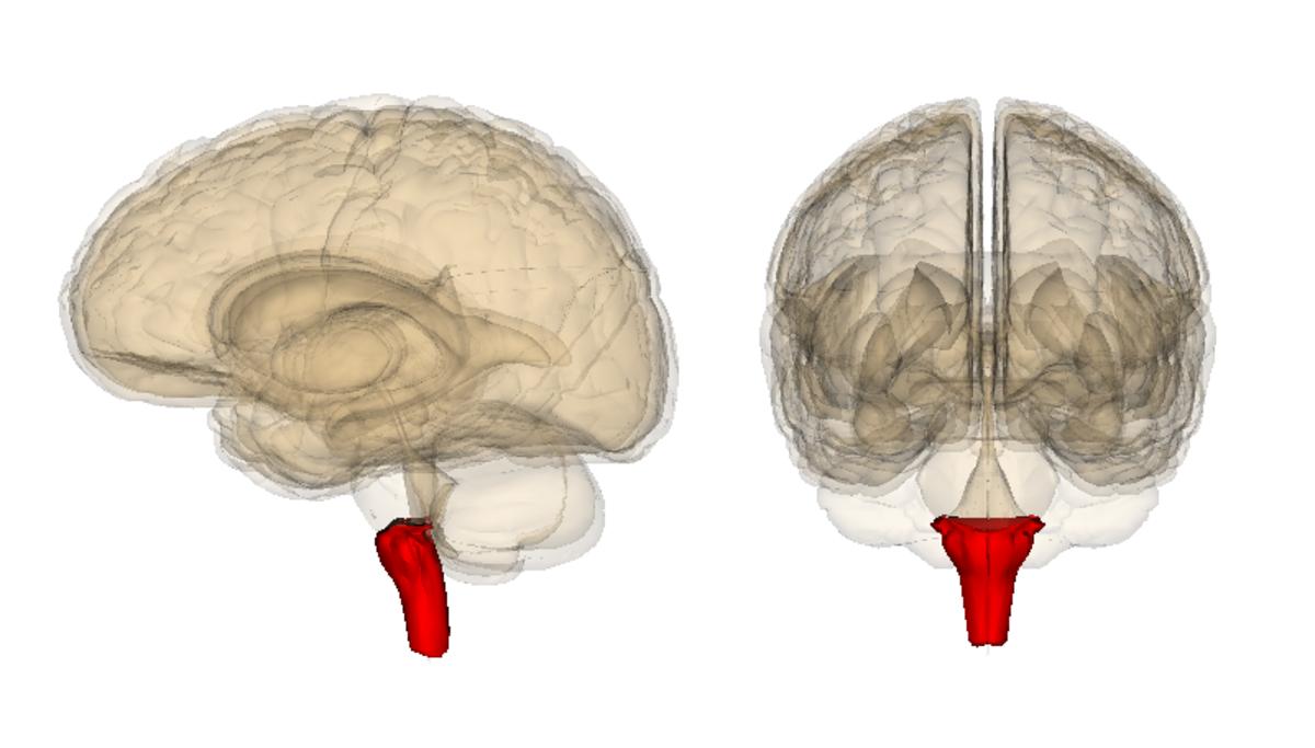 original-short-story-urella-mankings-brain-stem