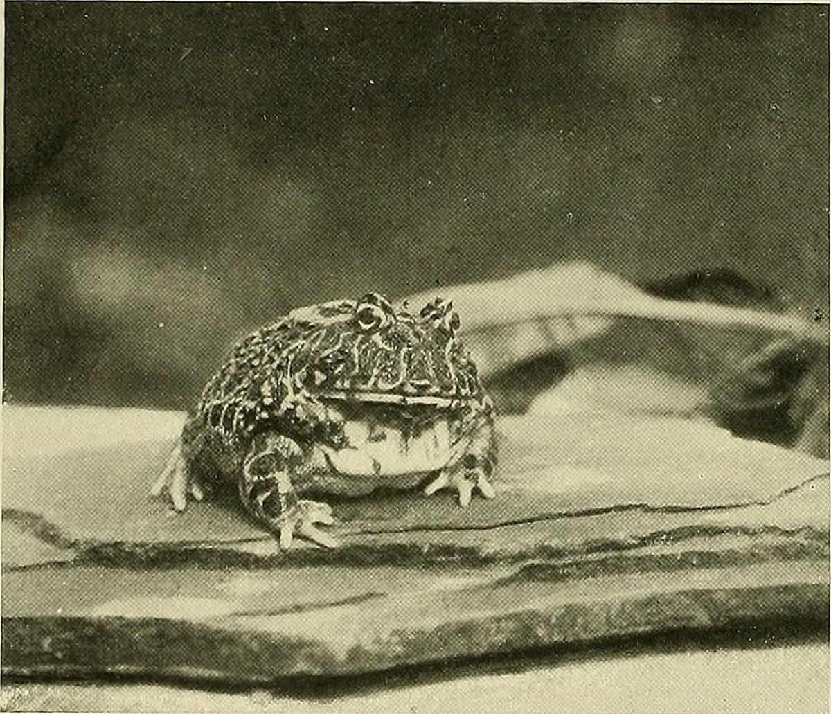 Image from page 301 of   Animal Life and the World  of Nature A magazine of  Natural History 1902