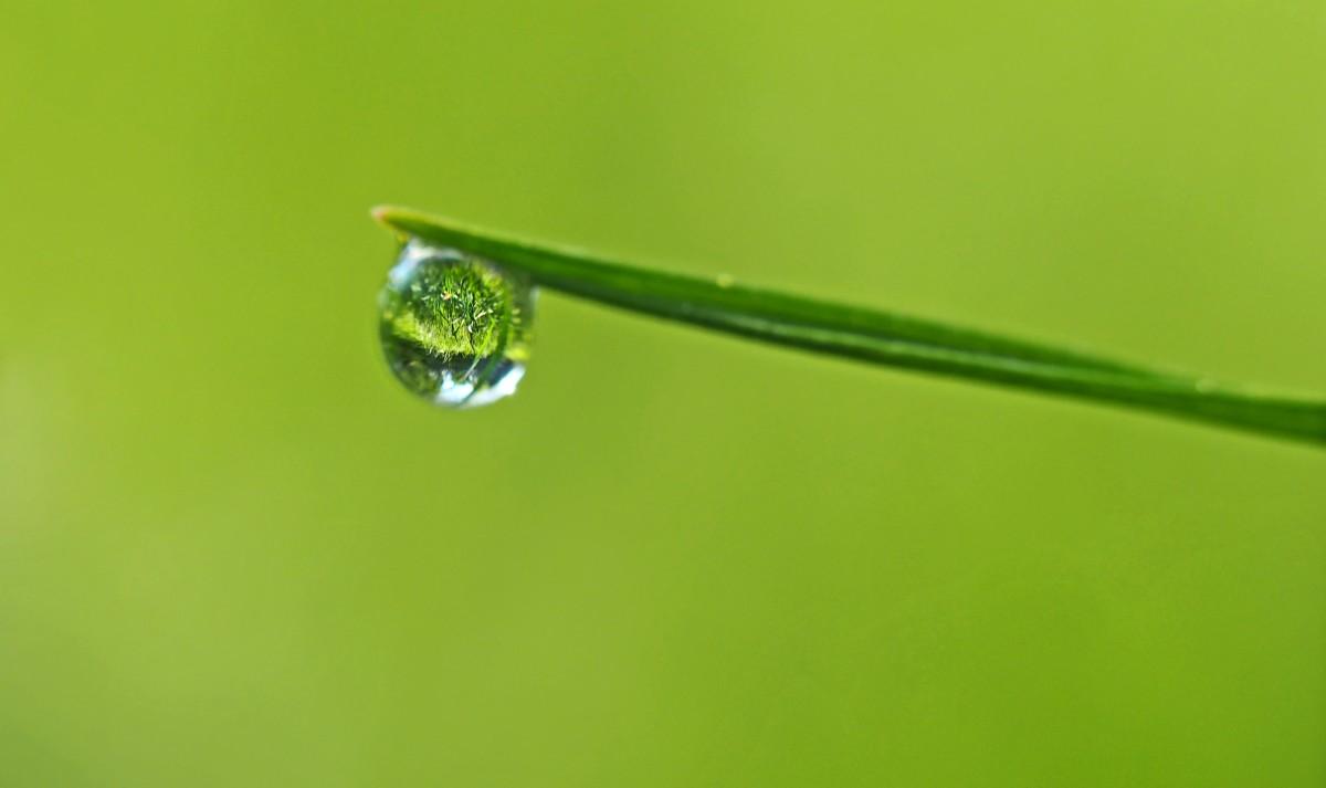 where-gloomy-grass-grows