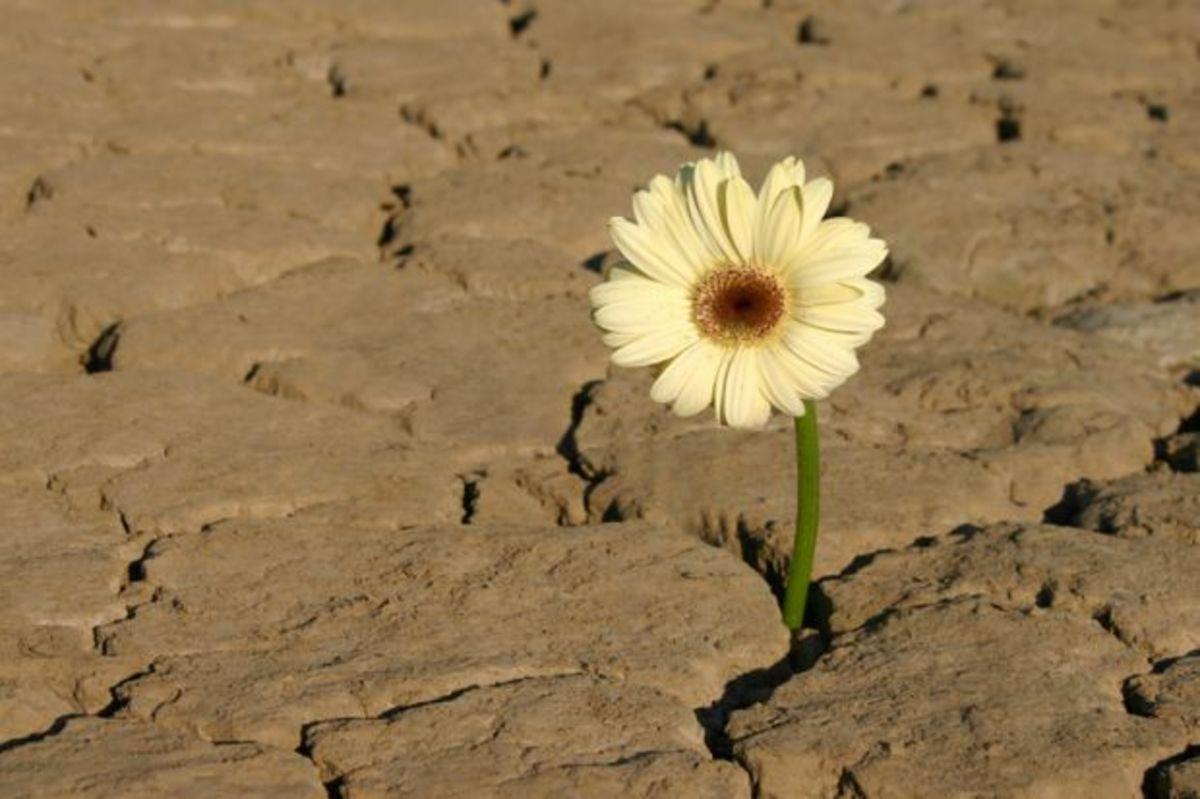 from imagecade.com