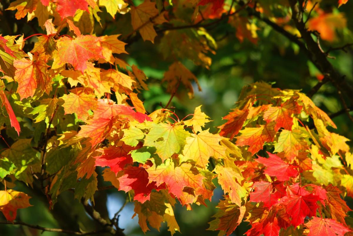 Autumn colors stake their claim.