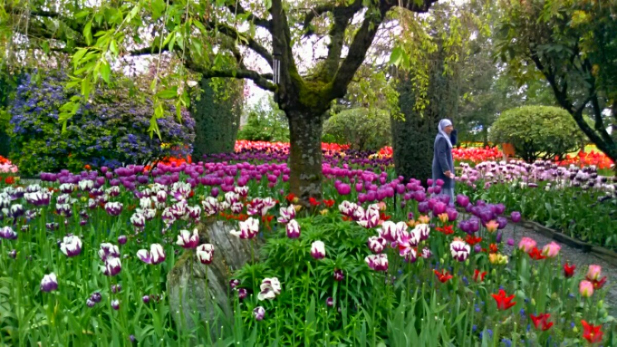 Colored flowers of every kind, planted gardens of design.