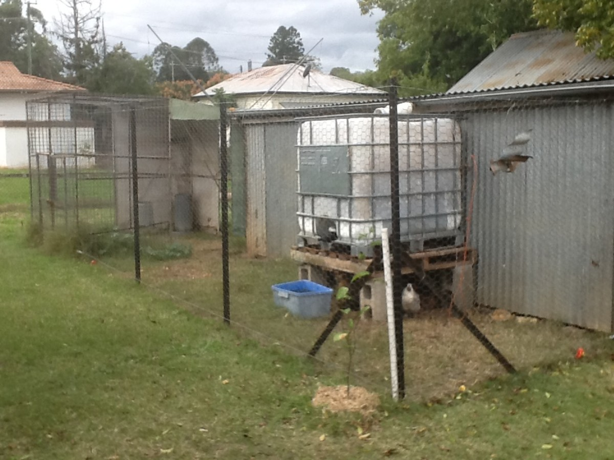 A view of the new chicken pen
