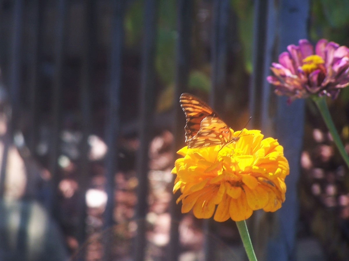 butterfly-afternoon