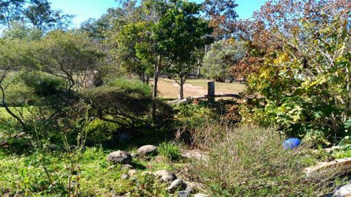 Part of the garden at Protea Park