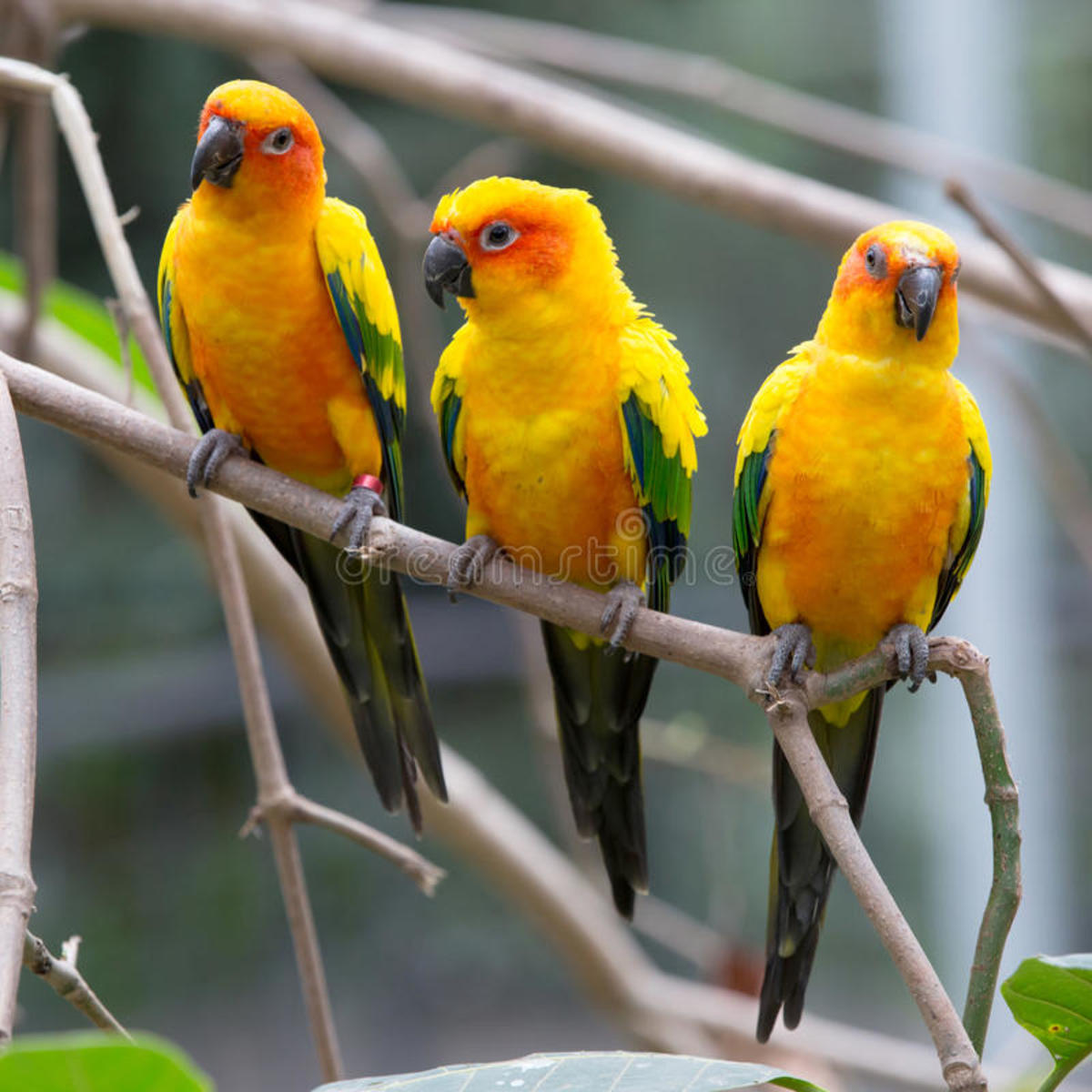 Birds Perching on tree's branch