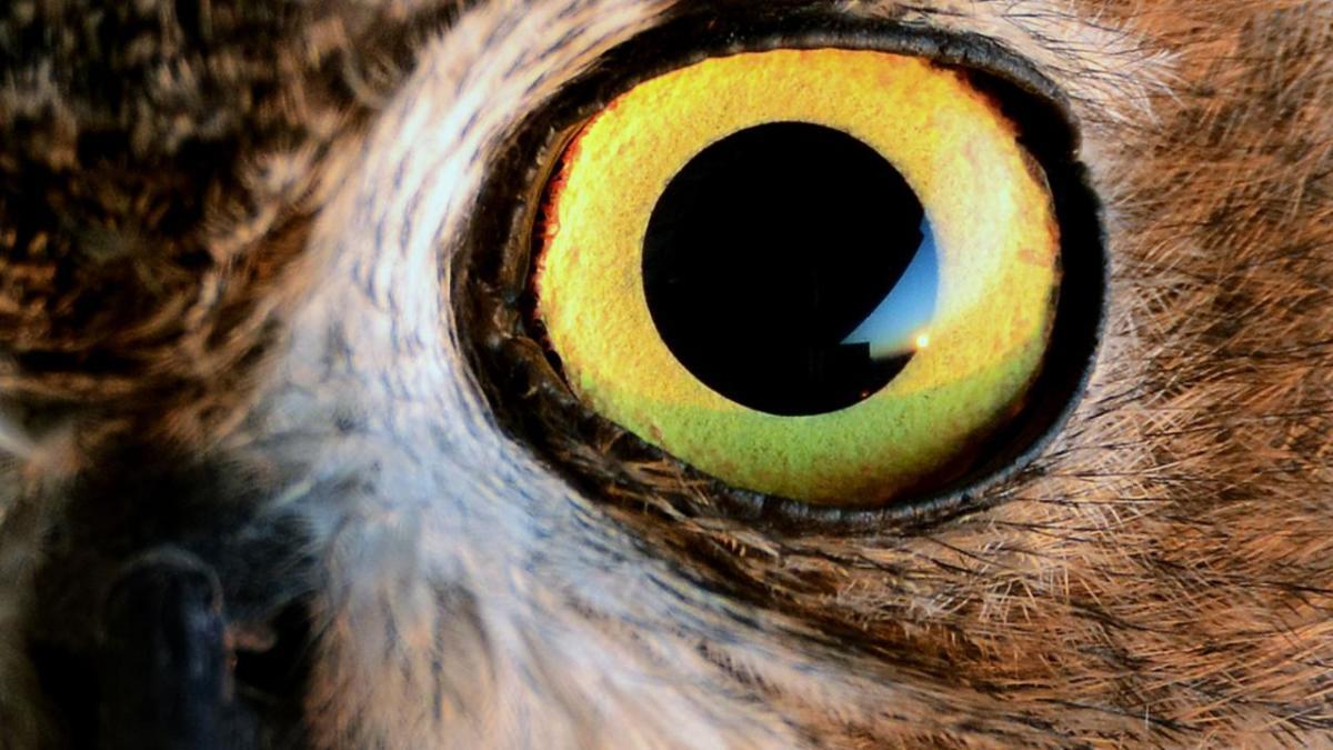 Eye of Bird