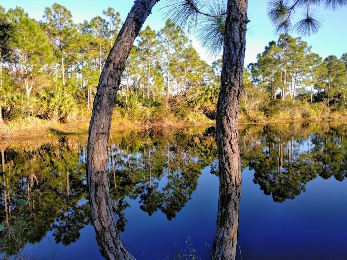 Halpatiokee Regional Park, Stuart, Florida