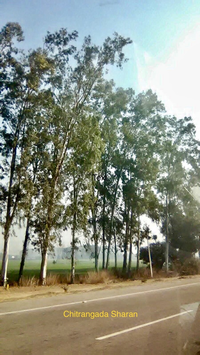 Have you ever wondered, why there are big trees, on either sides of the roads? Because, the trees reduce vehicular pollution.