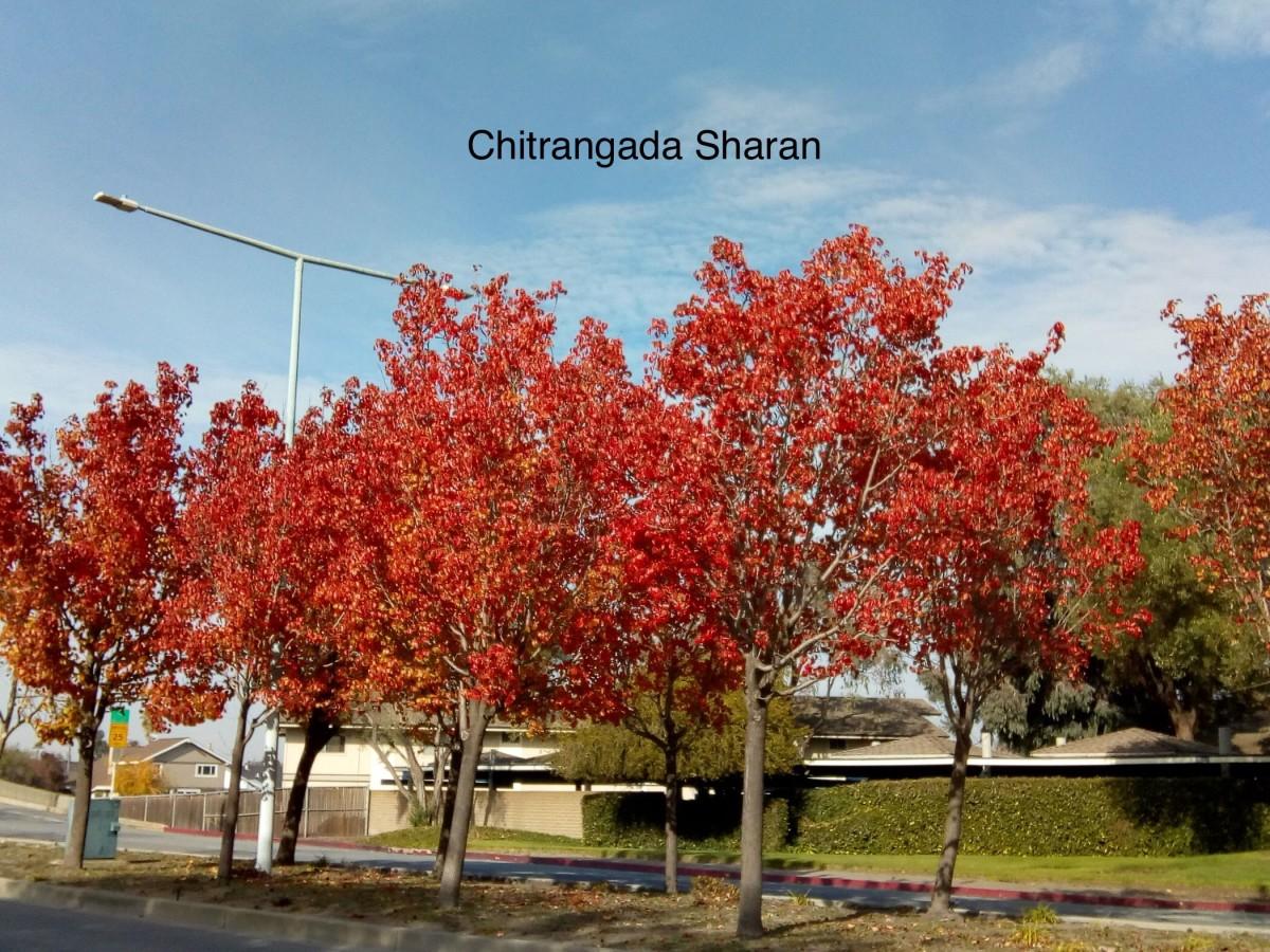 The beautiful fall colours, make you fall in love again.