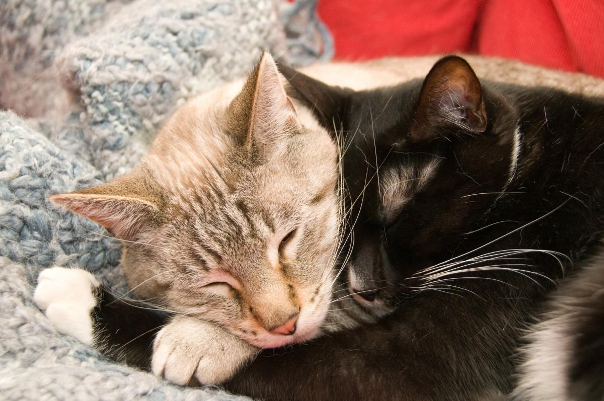 Saint Valentine's Cats